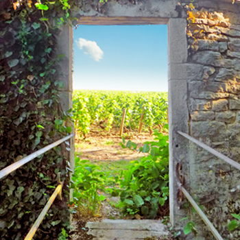 Doorway to vineyard in Burgundy France